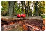 Herbstwald mit Äpfeln I