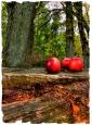 Herbstwald mit Äpfeln II