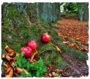 Herbstwald mit Äpfeln III